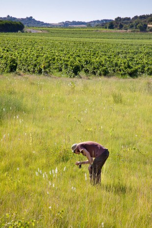 Après une courte formation, chaque agriculteur est ensuite « lâché » dans ses parcelles avec un support papier à remplir. Crédit photo: T. Gendre