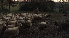 Jean-Paul Barilio, éleveur de brebis dans la zone Roquefort, a été président de l'association vétérinaire des éleveurs du Millavois.