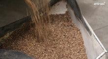 La cuma pratique le tri de semences depuis une trentaine d'années. Comment s'organise-t-elle ?