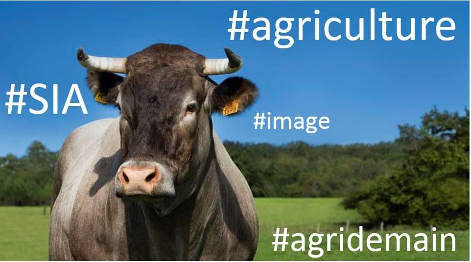 Cerise vache salon agriculture sia 2016 entraid 39 le for Nocturne salon agriculture