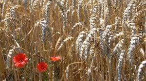 cereales cuma jura revenu