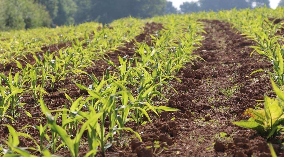 Great Plains YPE semis de maïs