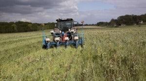 semis direct sous couvert maïs