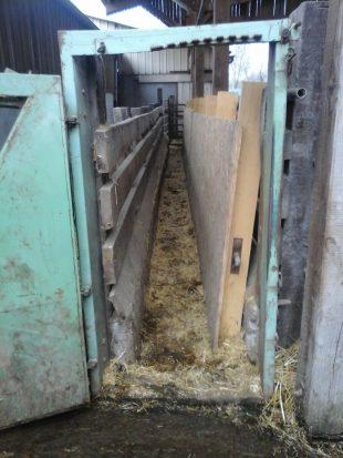 Couloir de contention de l'exploitation dont la largeur a été réduite pour manipuler de jeunes bovins
