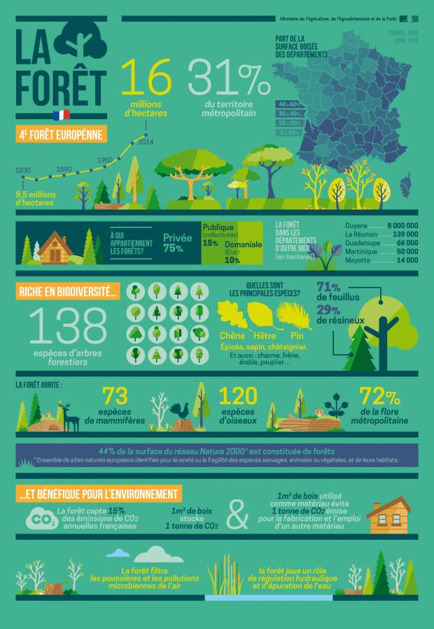 surface et espece arbres forêt française