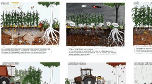 BD_arbre-et-paysage-vie-des-sols