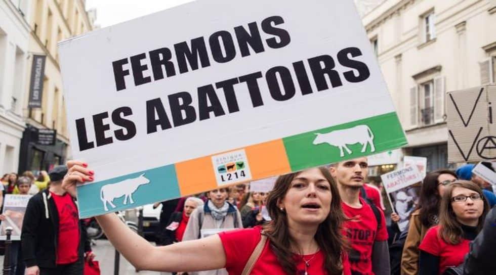 une pétition pour interdire l'abattage sans étourdissement