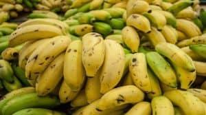 Une protection pour les bananes d'Outre-Mer