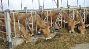 Meilleure rémunération pour la viande bovine française