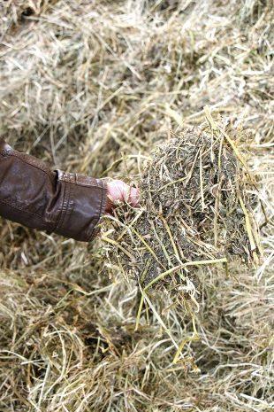 agroécologie_qualité_fourrages