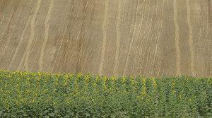 L'autoguidage pour simplifier la récolte