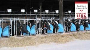 autoconsommation de céréales par les vaches