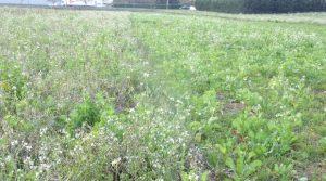 Quand semer ? Quelle méthode ? Tout savoir sur les couverts végétaux avec l'atelier du salon aux champs 2017