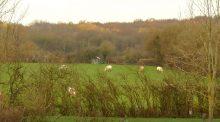 Dans la Nièvre l'exploitation des haies hautes pour la fabrication de plaquettes de bois permet de gagner en autonomie sur les exploitations d'élevage allaitant