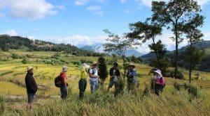 En Chine, les chercheurs du programme se sont intéressé à la co-culture de deux types de riz qui contrarie le développement du champignon responsable de la piryculariose.
