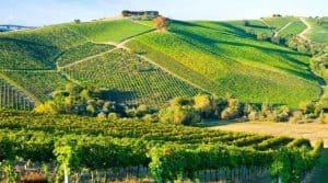 Taxe bois vignes