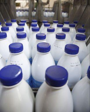 Chaîne de mise en bouteilles à la laiterie LSHD