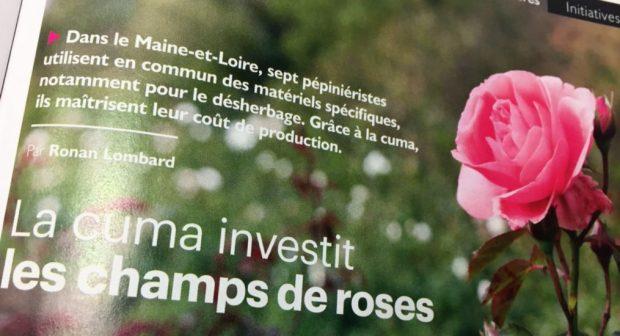 vie en rose producteur cuma rose
