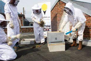 hostabee-rucher-connecte-paris-apiculture-abeille