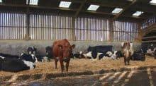 Dans le groupe, la marge brute moyenne est de presque 2000€/ha de SFP, avec des troupeaux croisés dont la production individuelle moyenne est inférieure à 5000l/an.