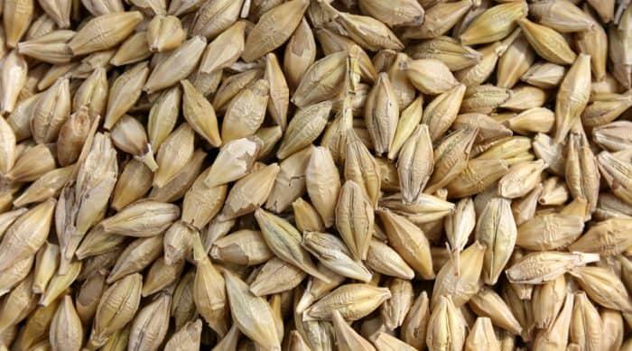 """Résultat de recherche d'images pour """"grain culture orge bio"""""""