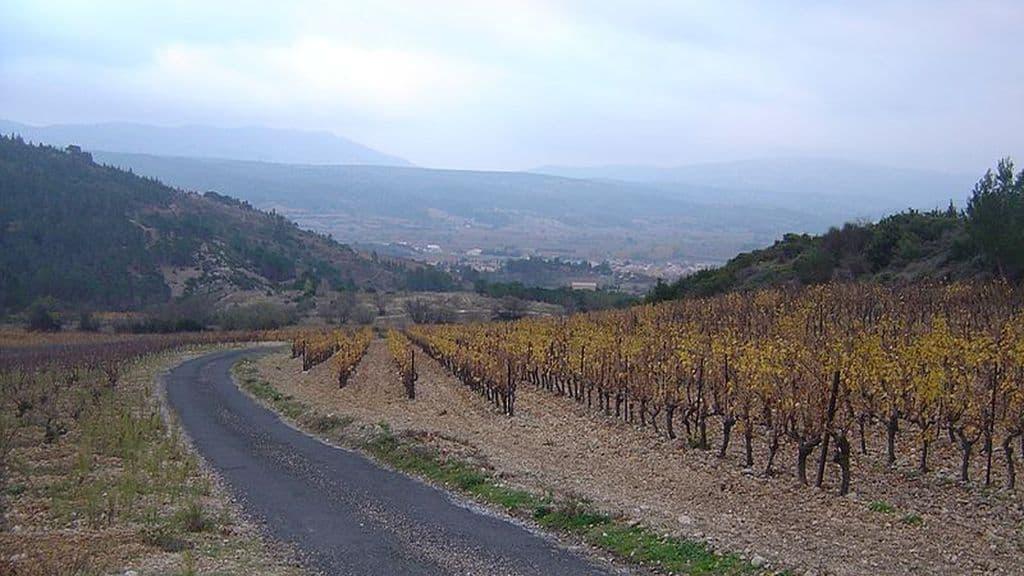Afp Regard sur la présidentielles de viticulteurs dans l'Aude.