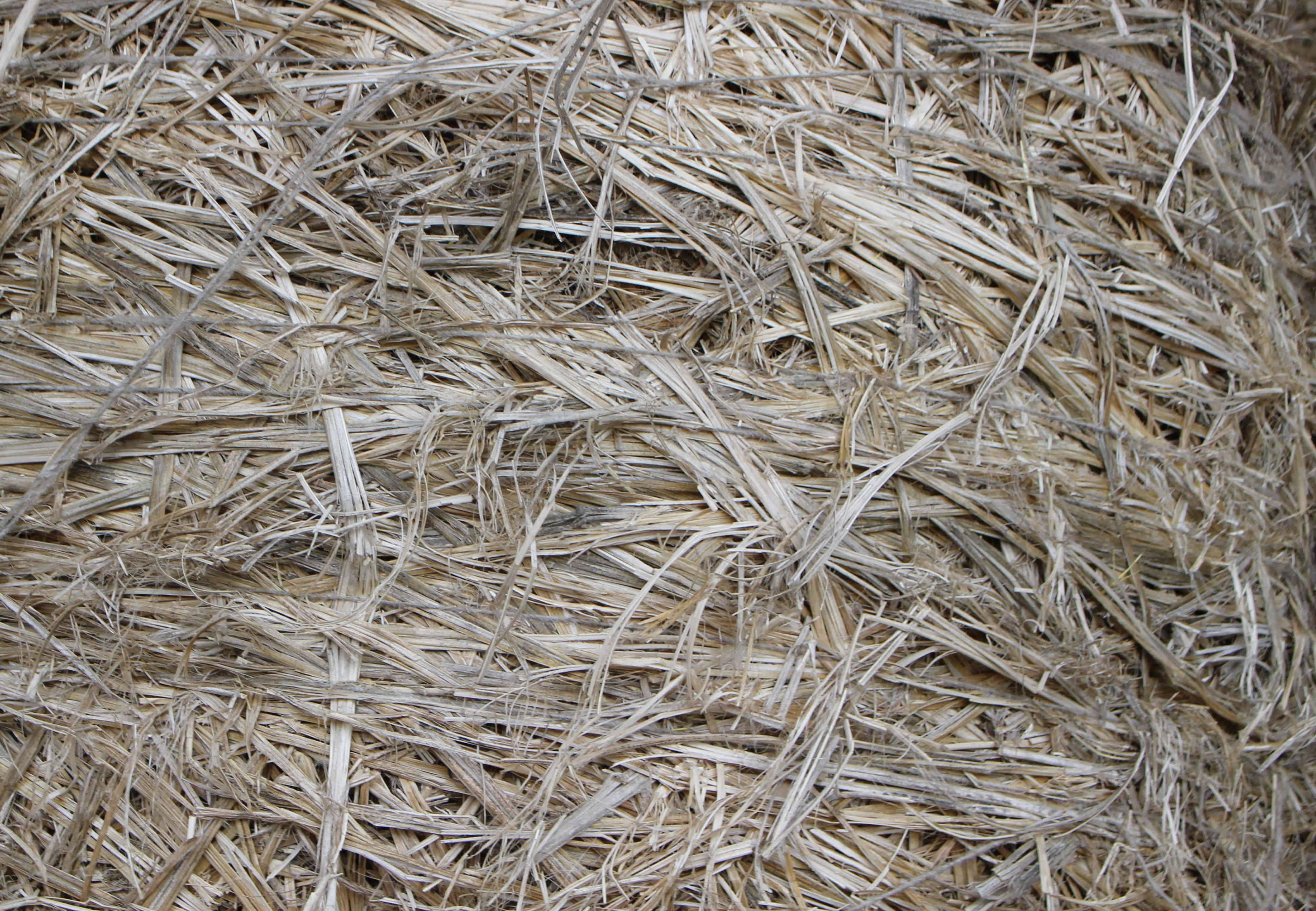 la fibre de chanvre est recherchée pour sa solidité