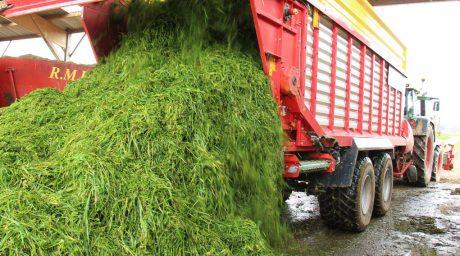Une dizaine d'éleveurs ont valorisé leurs couverts hivernaux, profitant du fait que leur cuma se soit équipée d'une faucheuse et d'une remorque.