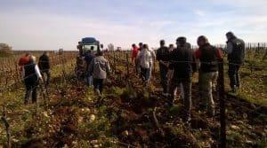 Un vif intérêt pour les outils de désherbage mécanique de la part de viticulteurs venant aussi des départements voisins.
