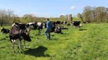 Cédric Foliard, ici au milieu de son troupeau, a fait installer 4 menhirs sur sa ferme il y a un mois.