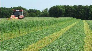 méteil, chambre agriculture, fourrages, récolte, Creuse, vesce, pois fourrager, céréales