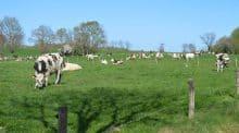La prairie est le principal décor de l'élevage qui valorise ainsi des terres au potentiel limité.