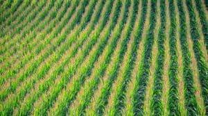 Au premier rang, les États Unis avec 72.9 millions d'hectares de plantations OGM. hausse de 3% de la valeur du marché depuis 2015