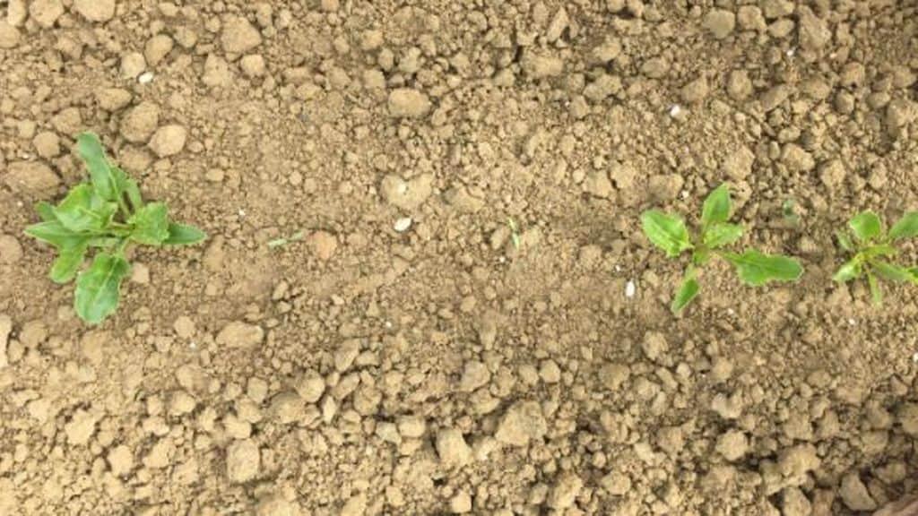AFP sols manque eau nappes phréatiques pluie déficit BRGM Quelles sont les régions les plus touchées ? Carte de France publiée par le BRGM.