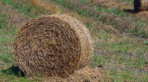 Accaparement des terres agricoles par des sociétés privées, crainte pour le monde de l'agrculture.
