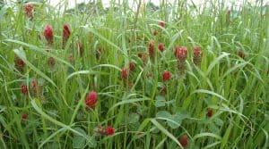 Les prairies multi-espèces sont composées au minimum de une à deux graminées et une à deux légumineuses. Hors-série élevage avril 20