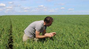 C2R2ALES AGRICULTURE BIOLOGIQUE ABEL PITHOIS DANS SON CHAMPS 91