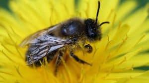 Désaccord avec l'utilisation de produits phytosanitaires tueurs d'abeilles interdits par l'union Européenne