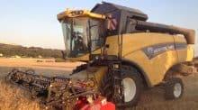 Récolte du blé dur