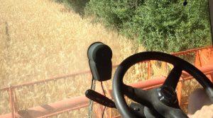 Recolte blé 2017 rendements