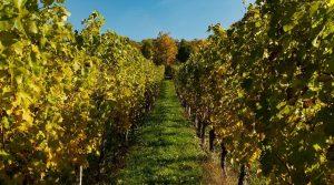 Les viticulteurs se réunissent face aux aléas climatiques liés au réchauffement climatiques à Vinexpo (Bordeaux) 2017.