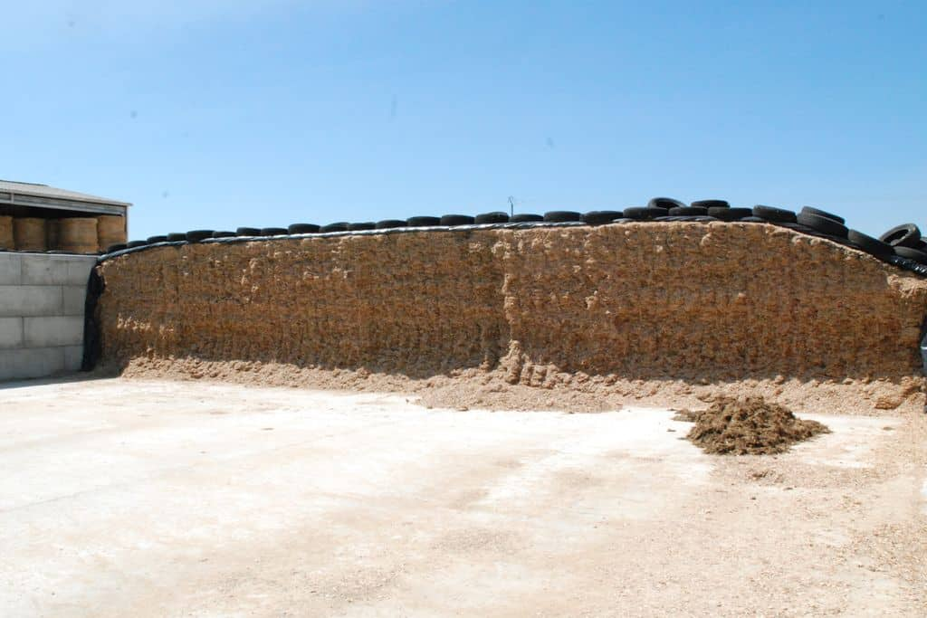Le silo de maïs du gaec