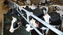Le gaec Thomelin produit 850 000 litres de lait avec 80 vaches, à Vouvray-sur-Huisne, dans la Sarthe.