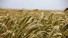 Nouvelles répartitions des aides de la PAC et du budget européen annoncé par le ministre de l'Agriculture Stéphane Travert.