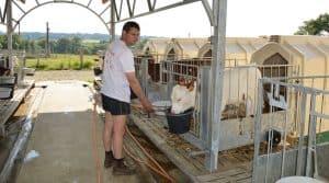 Délég'génisses permet aux exploitants laitiers de déléguer la reproduction et l'élevage de génisses avec des éleveurs via un contrat