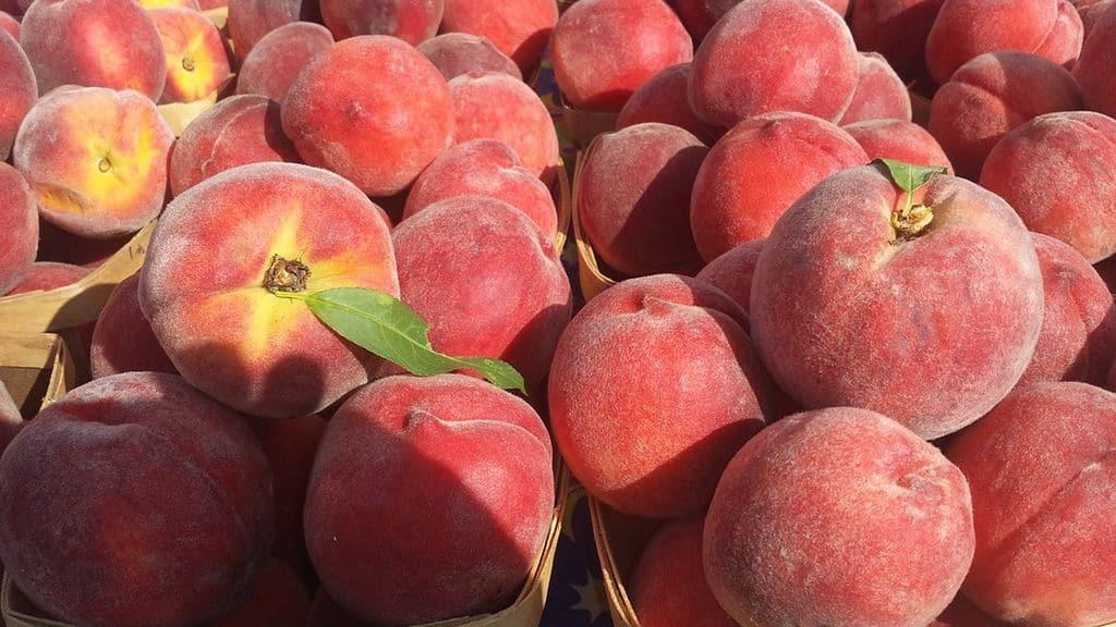 Crise des arboriculteurs dans le sud de la France, Pyrénées Orientales : les prix pêches et abricots connaissent la concurrence des voisins espagnols