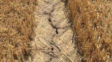 sécheresse-agriculture-foin-france-manque-eau-terre-sèche-moisson-rendements-élevage-alimentation