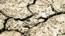 Sécheresse : 76 % des nappes affichent un niveau bas voire très bas