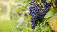 Deux producteurs plantent près de 3 hectares à moins de 30 kilomètres de Paris