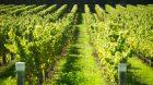 Rencontre entre Phil Hogan et les viticulteurs français lors du sommet du vin